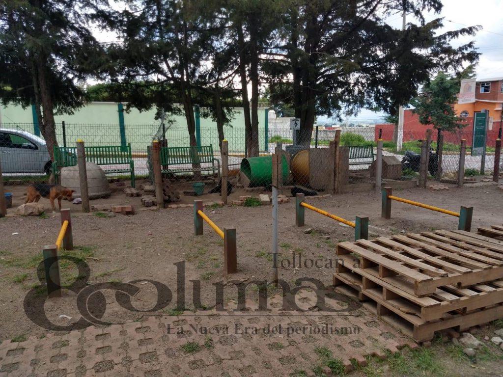 Refuerzan seguridad en refugio canino de Jocotitlán tras envenenamiento masivo - Jul 26, 2020
