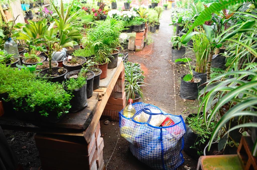 Cambia plantas por despensa - Sep 9, 2020