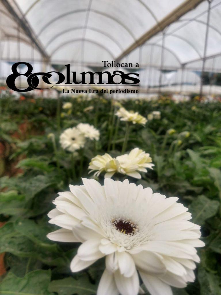 Floricultores mexiquenses visualizan bajas ventas en temporada de Día de Muertos - Oct 14, 2020