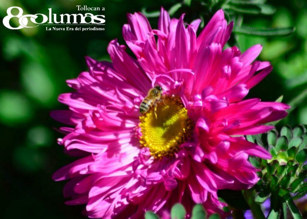 Floricultores mexiquenses en la incertidumbre (Galería) - Oct 19, 2020