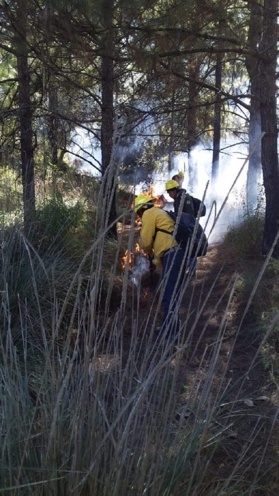 Realiza Edoméx trabajos preventivos contra incendios forestales - Ene 7, 2021