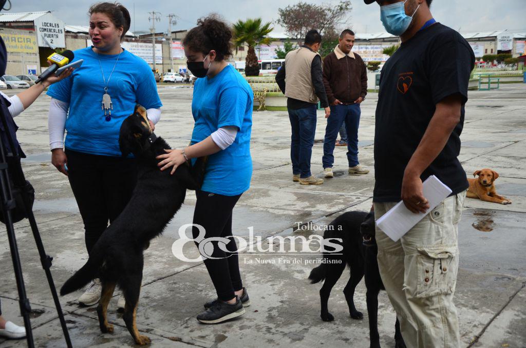 Promueven adopción de perros en Central de Abasto de Toluca - Jun 4, 2021